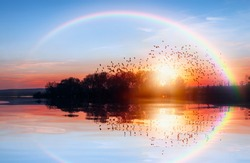 Silhouette of birds flying above the lake with rainbow at amazing sunset