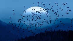 Silhouette of birds flying over blue mountains - Beautiful landscape with blue misty silhouettes of mountains against super blue moon rising