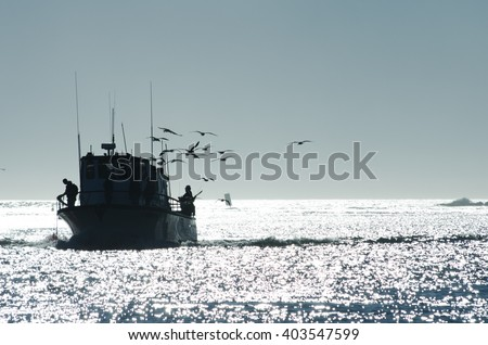 Silhouette of Birds Following a Fishing Boat