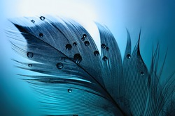 Silhouette of  black bird feather with water drops on a blue turquoise background with beautiful lighting. Elegant bright and expressive artistic image.