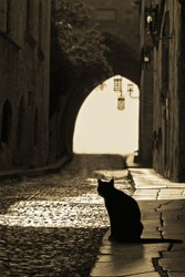silhouette of black cat at the street of an old city