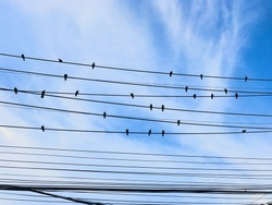 Silhouette of black, many pigeon birds standing horizontally on messy tangle electrical power cord cable wires with white cloud and blue sky background