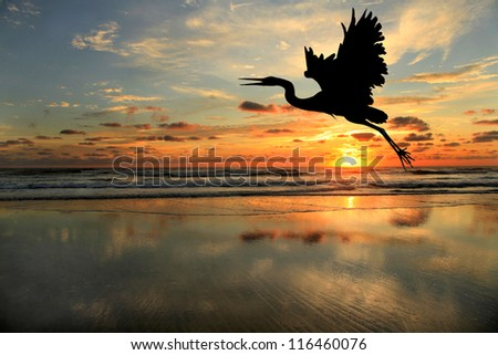 Silhouette of Blue Heron at the Beach at Sunrise