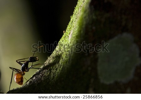 Silhouette of close-up big forest ant