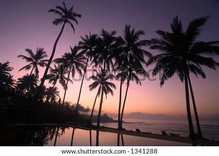 Silhouette of coconut tree at sunrise
