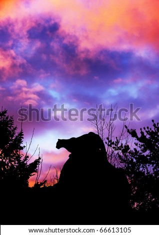 Silhouette of cougar stalking prey from a big boulder rock on top of a mountain in the forest against beautiful dramatic sunset sky.