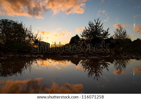 silhouette of cow in sunset