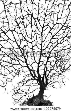 Silhouette of dead bonsai tree on white.