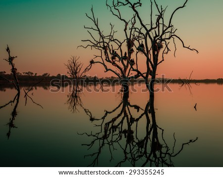 Silhouette of dead trees reflected in water of a dam landscape orientation 1