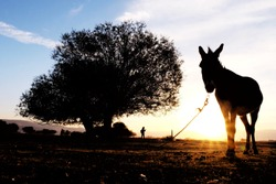 Silhouette of donkey standing in front of the tree
