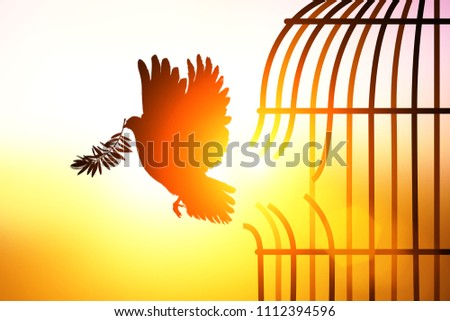 Silhouette of Dove carrying olive leaf branch out of boken cage to Freedom concept  and international aday of peace Stok fotoğraf ©