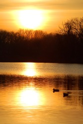 Silhouette of ducks at sunset with the reflection of the setting sun.