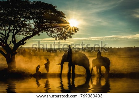 Silhouette of elephants , trees , monk and woman pay-respect in the sunset #769380403