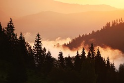 Silhouette of fir trees and mountains in the fog at dawn. Vintage hipster background. Natural mountain forest background.