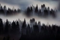 Silhouette of fir trees in the fog on the side of the mountains among the clouds. Dramatic fictional fantastic photo. Minimalism in nature.