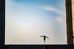 Silhouette of flexible girl dong handstand in split on sky background. Concept of individuality, creativity and outstanding