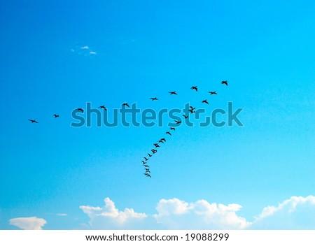 Silhouette of flying birds