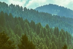 Silhouette of  forested himalayas mountain slope with the evergreen fir conifers shrouded in misty landscape view from prashar lake base camp at height of 2730 m  near Mandi, Himachal Pradesh, India.
