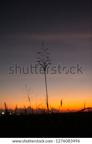 silhouette of grass with colorful  dramatic light twilight sky and sunset background #1276083496