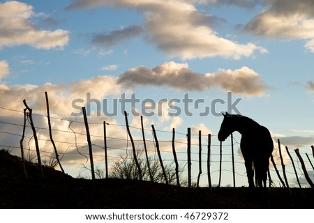 Silhouette of Horse Against Evening Sky
