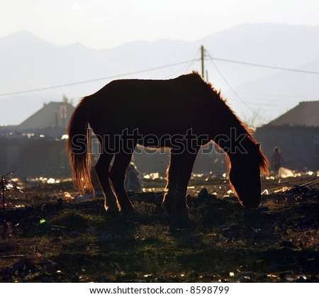 Silhouette of horse in garbage