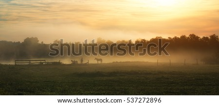 Stock Photo Silhouette of horses in a foggy field during a sunrise.