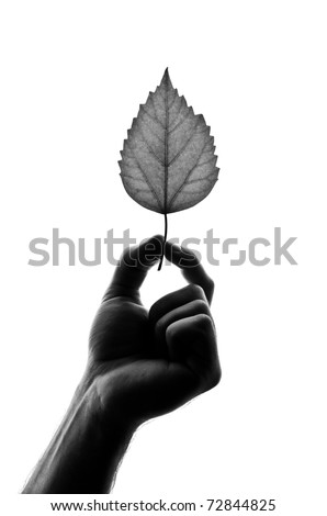 Silhouette of leaf in hand. Isolated on white
