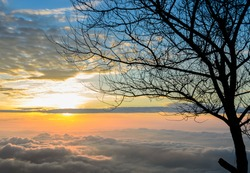 Silhouette of leafless tree on dramatic sunrise sky with sea of fog