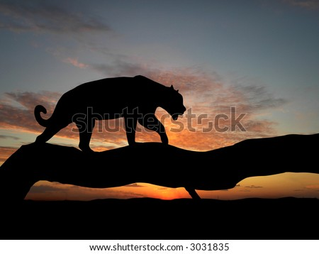 Silhouette of leopard on tree over sunset