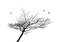 silhouette of lonely tree and bird isolated on white background