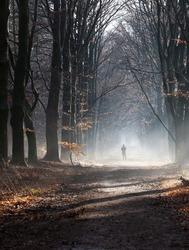 silhouette of man in foggy winter forest near utrecht in the netherlands on misty dirt road