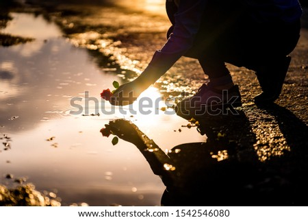 Silhouette of man on the sunset is putting a red rose to the water. Reflection. Love and romance concept