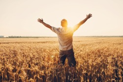 Silhouette of Man with hands up standing in wheat field. Beautiful Nature Sunset Landscape. Rural Scenery under Shining Sunlight. Background of ripening ears of wheat field. Rich harvest Concept.