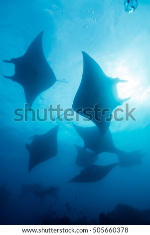 Silhouette of manta ray #505660378