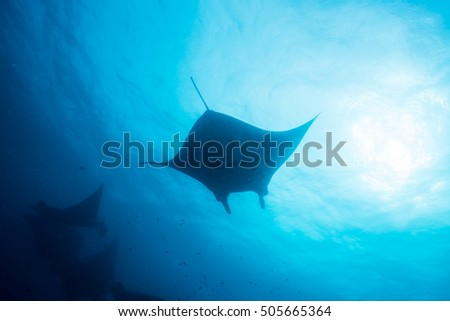 Silhouette of manta ray #505665364
