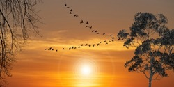 Silhouette of migratory bird flying at sunset in the sky. Birds flying  into the beautiful orange autumn.