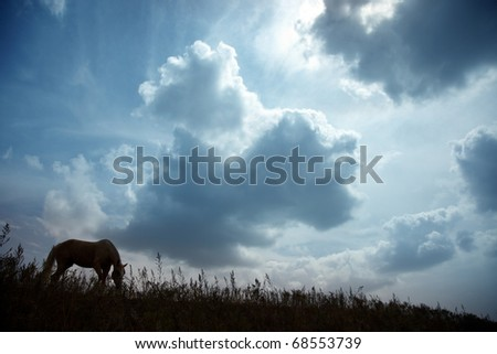 Silhouette of one horse in the steppe during sunset. Natural light and colors. Kazakhstan