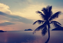 silhouette of palm tree at sunset and sea landscape