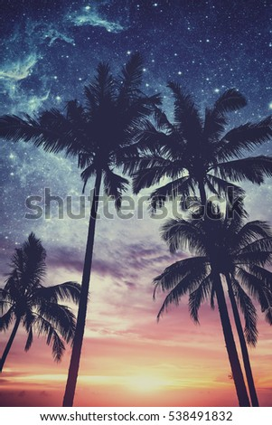 Silhouette of palm trees at sunset and stars. Matte vintage photo processing.