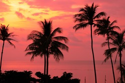 Silhouette of palm trees Beautiful sunset on the tropical sea beach on nature pink background for travel in holiday relax time,