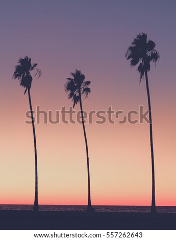 Silhouette of Palm trees on the beach at sunset in Southern California