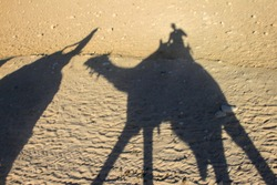Silhouette of people riding camels on sand in the desert, Giza, Egypt