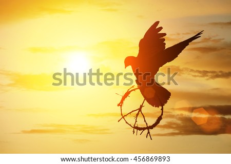 silhouette of pigeon dove holding branch in pacification sign shape flying on sunset sky for freedom concept ,international day of peace 2017