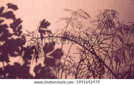 Silhouette of plant behind curtain. Light and shadow sunset on old retro beige fabric texture. Granny's house vintage textile background. Abstract backdrop with floral pattern and crossed lines shadow