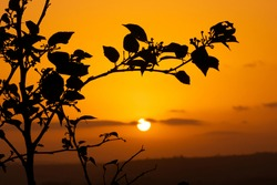 Silhouette of  plant twigs with leaves during orange colored sunset sky with clouds. Used selective focus on leaves.