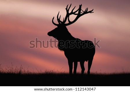 Silhouette of red deer against sky