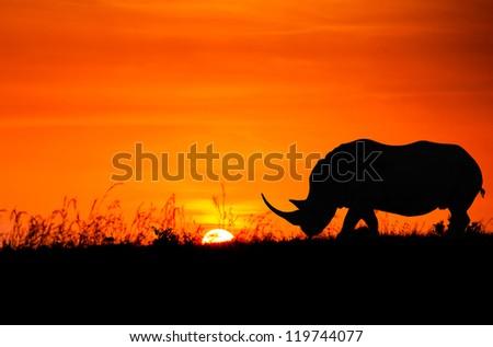 african sunset silhouette of rhinoceros