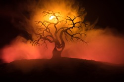 Silhouette of scary Halloween tree with horror face on dark foggy toned fire. Scary horror tree Halloween concept. Selective focus