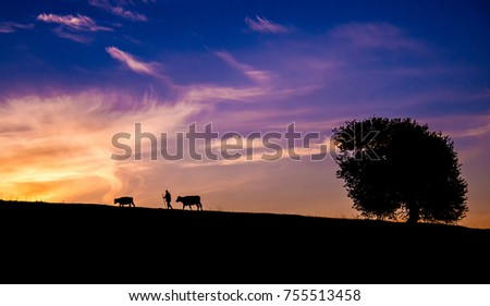 Silhouette of shepherd, cows and tree against sunset sky