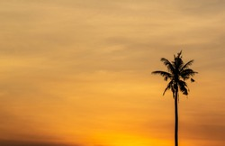 Silhouette of single palm tree with background of sunset sky